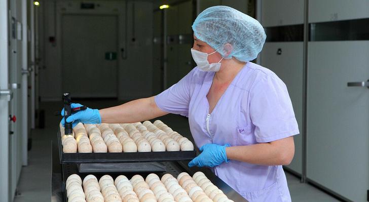 «Дамате» вышла на 100%-ную самообеспеченность инкубационным яйцом в Ростовской области